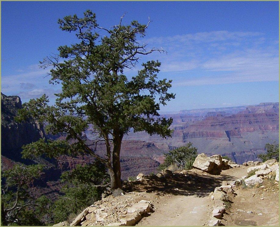boom als symbool voor de rust die massage geeft